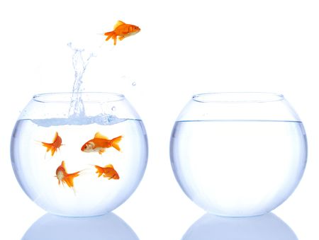 leaping: goldfish jumping to a better house