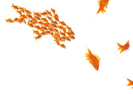 goldfishes as a team and single goldfishes, motion blur on escaping one Stock Photo - 3670583
