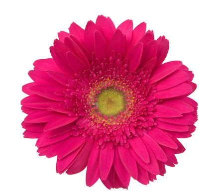 beautiful and colorful daisy flowers on white background