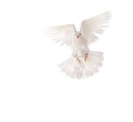 beautiful pigeon Stock Photo - 4715407