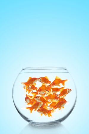 lots of goldfish in a bowl on a blue background, space for messages Stock Photo - 6177981