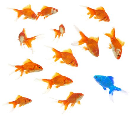 diversity concept with lots of goldfishes, and an alien goldfish inside Stock Photo - 6453753