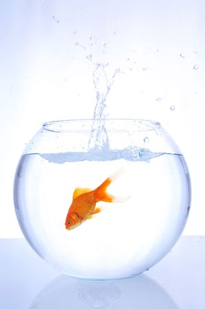 goldfish jumping into a bowl with speed on gradient background photo