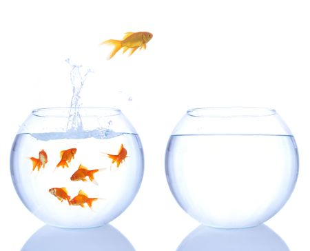 goldfish bowl: lots of goldfishes in a bowl and yellow goldfish jumping to a better place