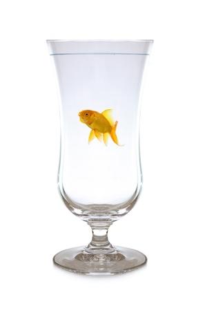 Goldfish swimming in wineglass Stock Photo - 8385680