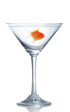 copa de martini: peces de colores en un vaso de martini sobre fondo blanco