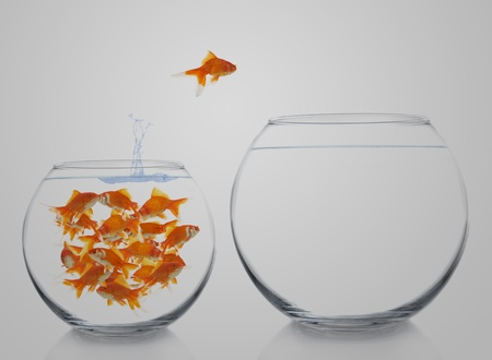 goldfish moving to a bigger house Stock Photo - 8738525