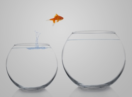 goldfish moving to a better and bigger house Stock Photo - 8738480