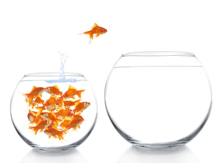 goldfish moving to a bigger house Stock Photo - 17013046