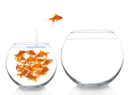 pez dorado: goldfish mudarse a una casa más grande