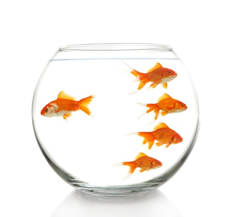business concept with some goldfishes in bowl, on white Stock Photo - 17129336