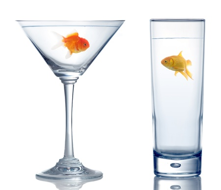 two different goldfish in two different glass for real estate concept on white photo