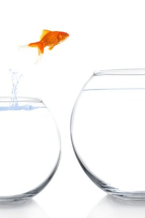 goldfish moving to a better and bigger house Stock Photo - 17264892