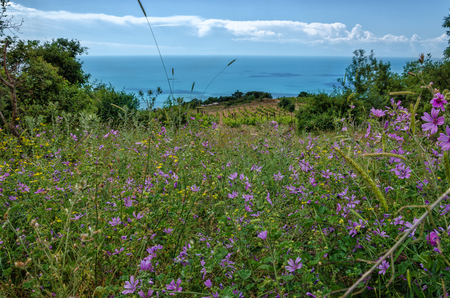 Summer flowers over the sea coast