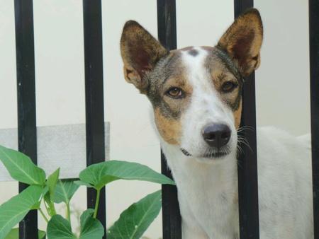white dog: Dog