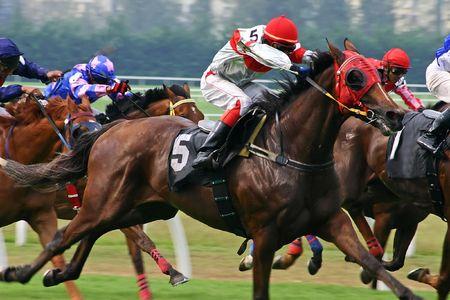 carreras de caballos: Caballo que compite con el juego. Foto de archivo