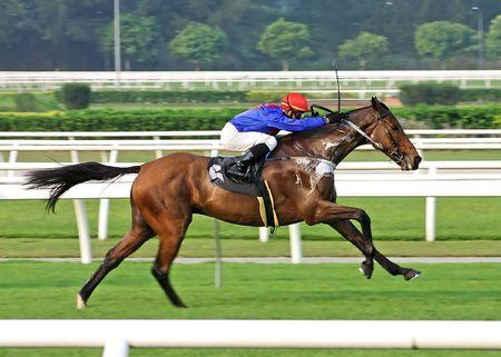cavallo in corsa: Gioco di corse di cavalli  Archivio Fotografico