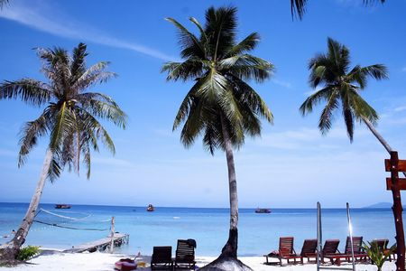 lang: Coconut Trees At Lang Tengah, Malaysia.