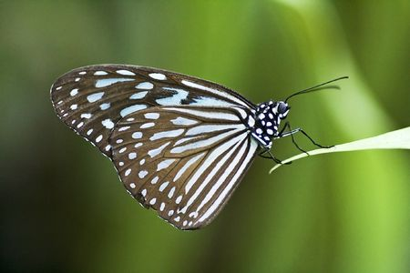 Butterfly close up Stock Photo - 538480