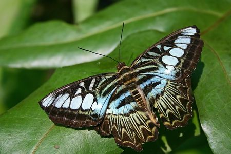 Butterfly close up Stock Photo - 538472