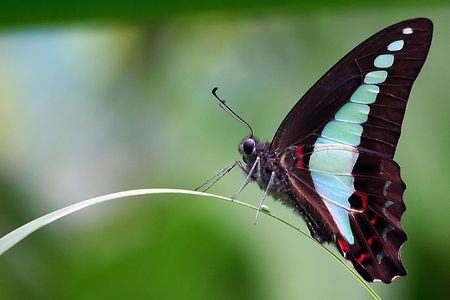 Common Blue Bottle Butterfly Stock Photo - 594099