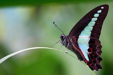 Common Blue Bottle Butterfly Stock Photo - 594099