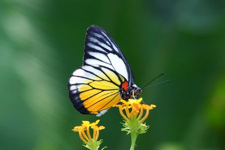 butterflies flying: Mariposa de cerca Foto de archivo