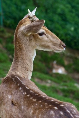 rudy: Deer close up in the park. Stock Photo