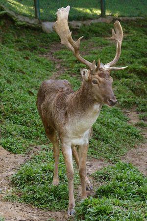 rudy: Deer close up