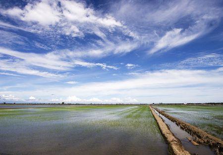 Paddy field in Sekinchan, Malaysia. Stock Photo