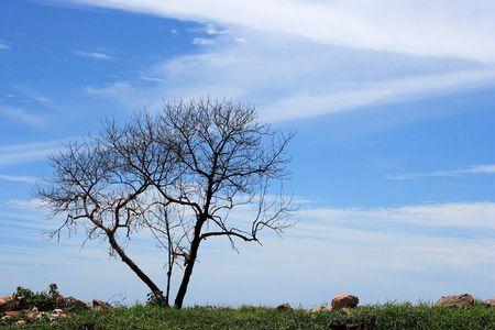 Lonely tree scene. photo