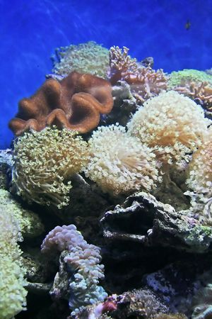 fishtank: Empty fishtank with coral. Stock Photo