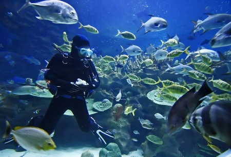 aquarium: Diver and fishes. Stock Photo