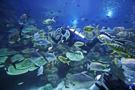 fishy: Diver and fishes. Stock Photo