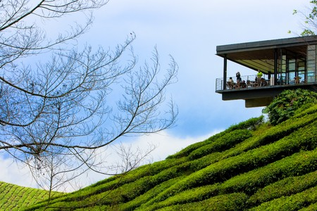 cameron highlands: Tea plantation in cameron highland in Malaysia. Stock Photo