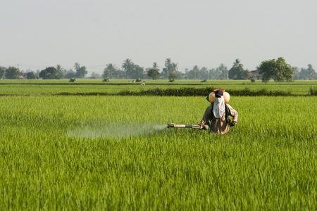 A farmer working at paddy field in Sekinchan, Malaysia. Stock Photo