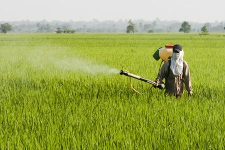 pesticide: A farmer working at paddy field in Sekinchan, Malaysia. Stock Photo