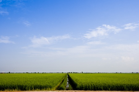 The Paddy field landscape in asia country. photo