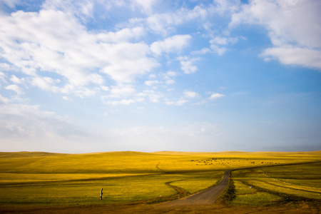 meadowland: Inner mongolia grassland with blue sky in autumn. Stock Photo