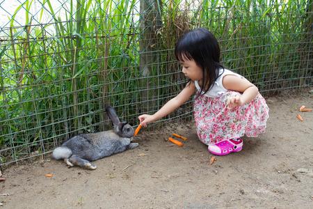 niñas chinas: Niña asiática china Alimentar a un conejo con la zanahoria en la granja