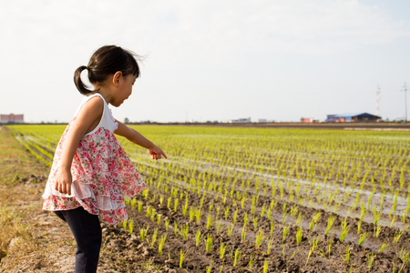 asia children: Asian Little Chinese Girl Standing at Rice Field in Rural Area