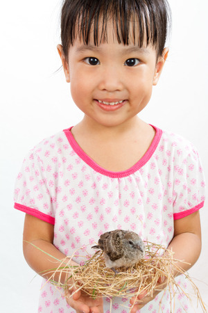 rescue: Asian Little Chinese Girl Holding Small Bird in hands isolated on White Background Stock Photo