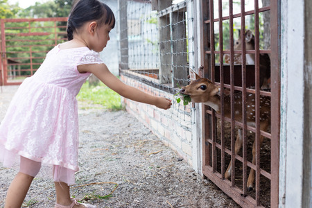 Asian Little Chinese Girl feeding a deer in the Outdoor Farm Stock Photo