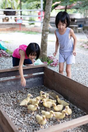 Asian Little Chinese Sisters Feeding Ducks in the Outdoor Farm