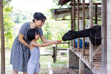 Asian Little Chinese Girl and mother feeding a goat with Carrot in the Outdoor Farm