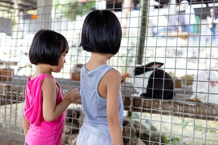 Asian Little Chinese Sisters Feeding Rabbits with Carrot in the Outdoor Farm