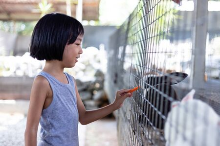Asian Little Chinese Girl Feeding Rabbits with Carrot in the Outdoor Farm