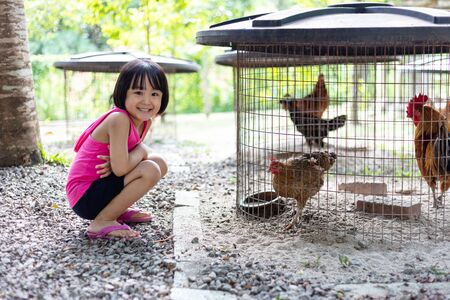 Asian Little Chinese Girl Feeding chick in the Outdoor Farm 스톡 콘텐츠
