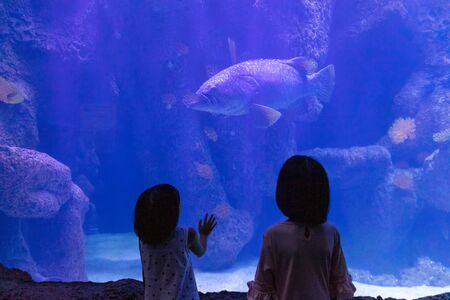 Asian Little Chinese Sisters watching fishes in the aquarium