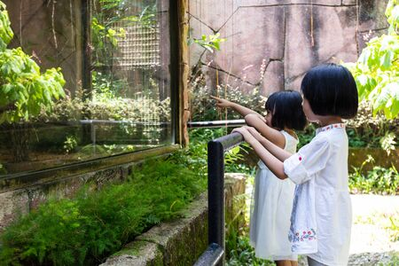 Asian Little Chinese Sisters watching animals at the zoo